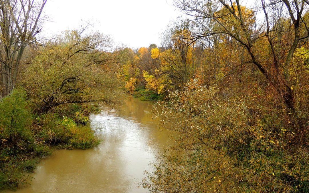 Sydenham River Nature Reserve