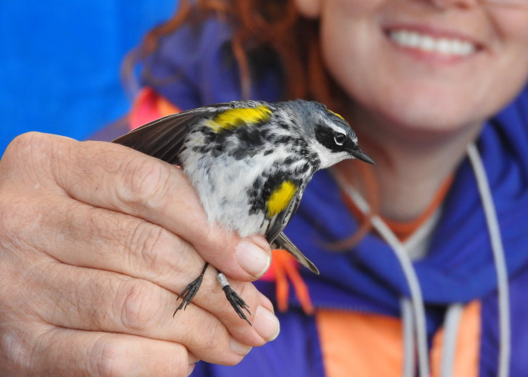 SFN outing to Canatara Park for bird banding