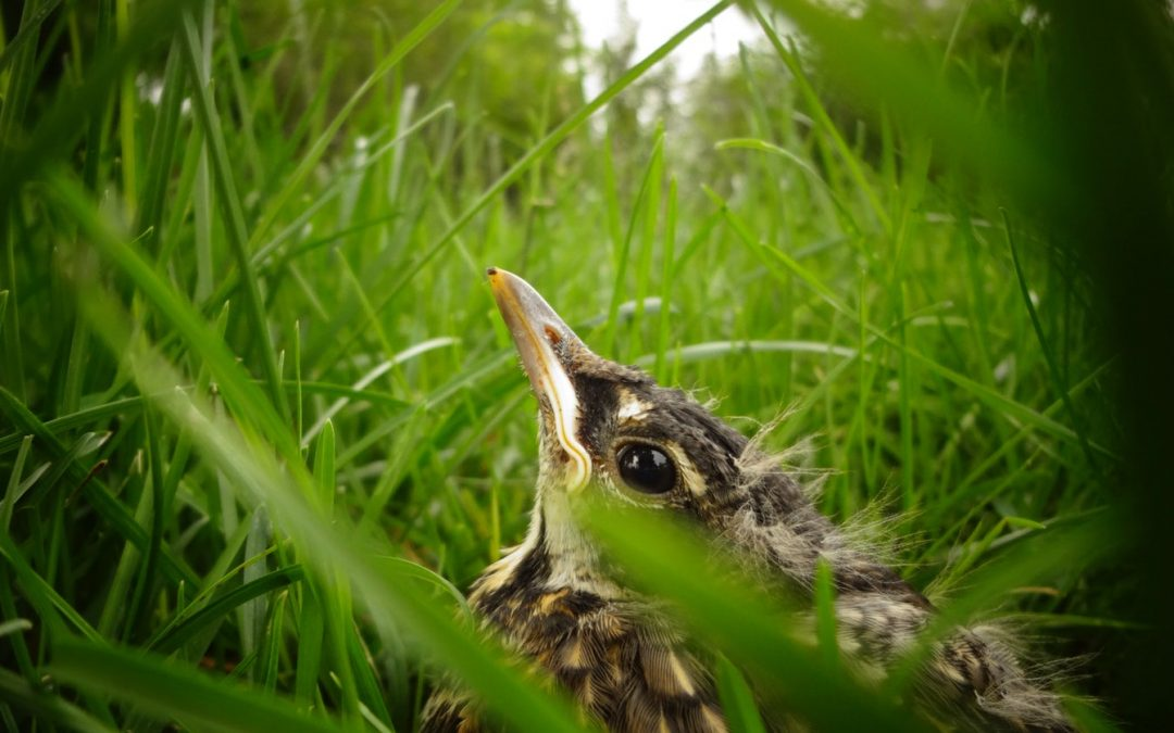 Making Your Garden a Safe Haven for Birds